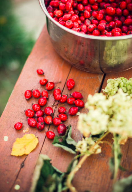 Why Do You Want Rosehip in Your Skin Care Products?