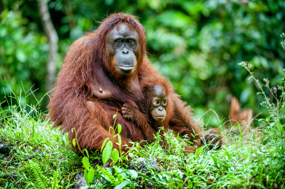 It's Time to Get Real about Palm Oil