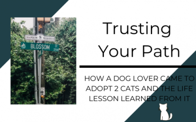 Trusting Your Path